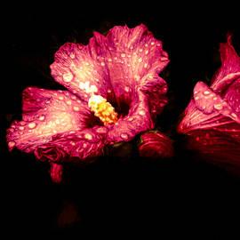 Debra Lynch - Colorful Hibiscus Flower