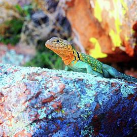 Colorful Lizard aka Mister Art by Toni Hopper