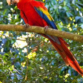 Colorful Macaw by Bob Hislop