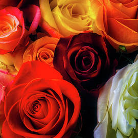 Colorful Moody Roses - Garry Gay