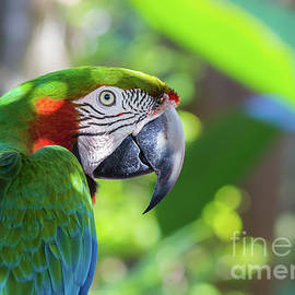 Liesl Walsh - Colorful Parrot in Bright Sunlight