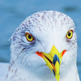 Colorful Seagull Smiling by Jeff at JSJ Photography
