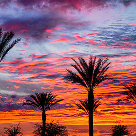 Saija Lehtonen - Colorful Silhouette Skies