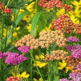 Nancy Spirakus - Colorful Summer Garden Ohio