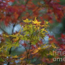 Colors of Autumn in the Arboretum - Mike Reid