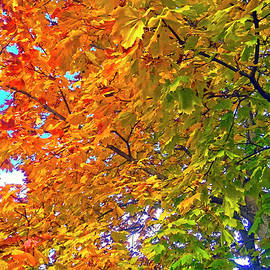 Johanna Hurmerinta - Colors of Autumn