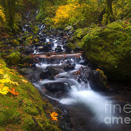 Colors of Fall by Mike Dawson