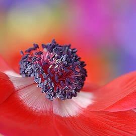 Colour my world by Jacky Parker