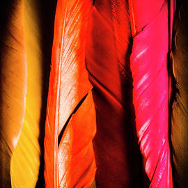 Jorgo Photography - Wall Art Gallery - Colourful feather art