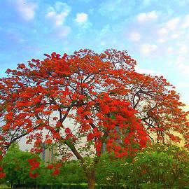 Colours - Gulmohar Tree  by Atullya N Srivastava