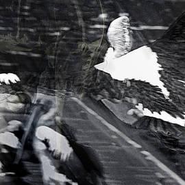 Miroslava Jurcik - Coming In For Landing