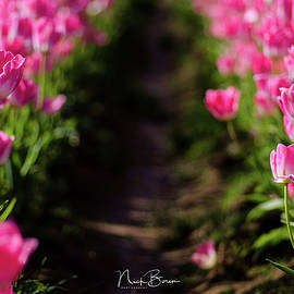 Nick Boren - Coming Up Pink