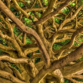Reid Callaway - Complexed Design 2 Oahu Native Trees Hawaii Collection Art