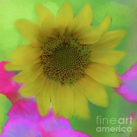 Linda Troski - Complimentary Sunflower