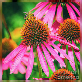 Kasia Bitner - ConeFlower Bee