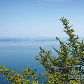 Coniferous Trees On Blue Sky Background by Sergey Taran