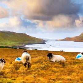 Connemara Sheep Grazing Over Killary Fjord by Mark E Tisdale