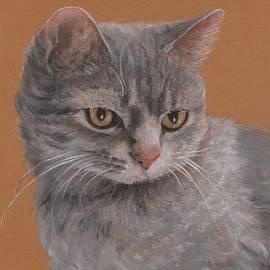 Contemplative Cat by Pamela Humbargar