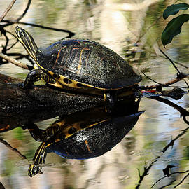 Cooter Reflections by Debbie Oppermann