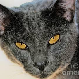 Copper Eyes by Beverly Elliott