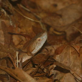 Copperhead Camouflage by Aaron Rushin