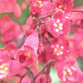 Coral Bells by Jean Hall