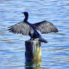 Dorothy Berry-Lound - Cormorant Drying His Wings