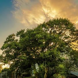 Corner Oak by Marvin Spates