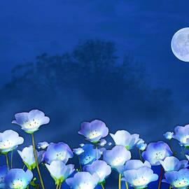 Valerie Anne Kelly - Cornflowers in the moonlight