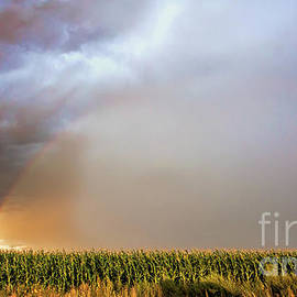 Corny Weather by Jim Garrison