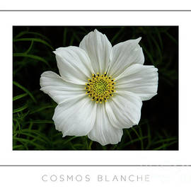 Mike Nellums - Cosmos Blanche poster