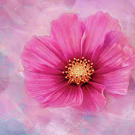 Terry Davis - Cosmos on Pastel Texture