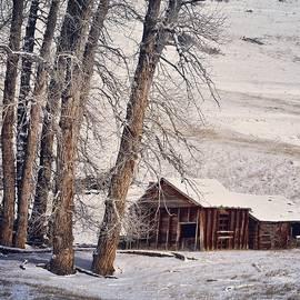 Limestone Cottonwoods by Kelly A Wolfe