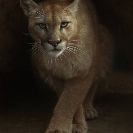 Cougar - Emergence by Collin Bogle