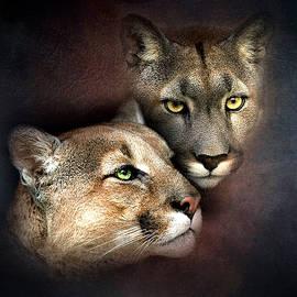 G Berry - Cougar Portrait 003