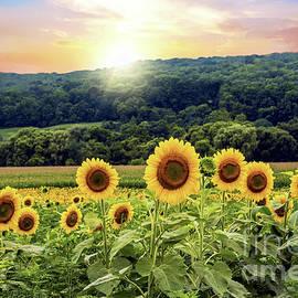 Regina Geoghan - Countryside Sunflower Landscape