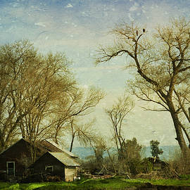 Pamela Patch - Country Home