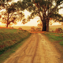 Peter Walton Photography - Country Road Near Mansfield, Victoria, Australia