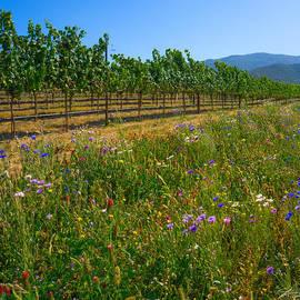 Country Wildflowers V by Shari Warren