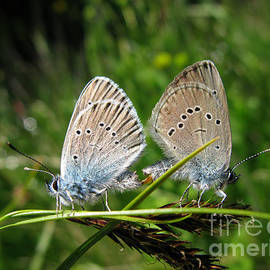 Couple Of Butterflies 5064 by Murielle Sunier