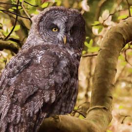 Jordan Blackstone - Courage - Owl Art