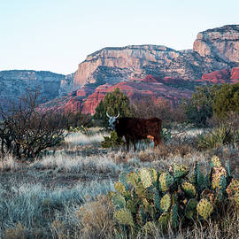 Cow At Red Rock by Susie Weaver
