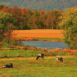 Cow Farm on the AT by Raymond Salani III