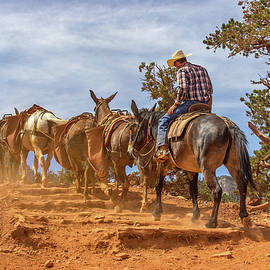 Pete Hendley - Cowboy and Mule Train on the South Kaibab Trail in the Grand Canyon