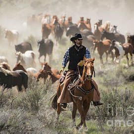 Georgia Evans - Cowboy with black hat and sorrel horse leading horse herd