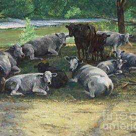 Cows at Big Creek - Don Langeneckert