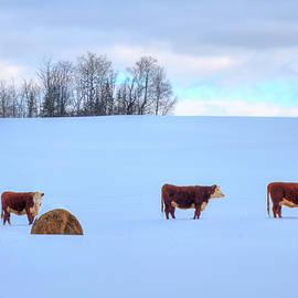 Joann Vitali - Cows in Snow - A Vermont Winter