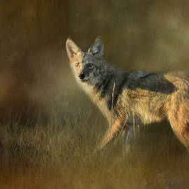 Jai Johnson - Coyote At Sunset