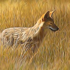 Coyote Sunshine by Frank Lee Hawkins
