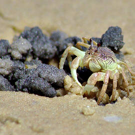 Crab On The Beach by Jeremy Hayden